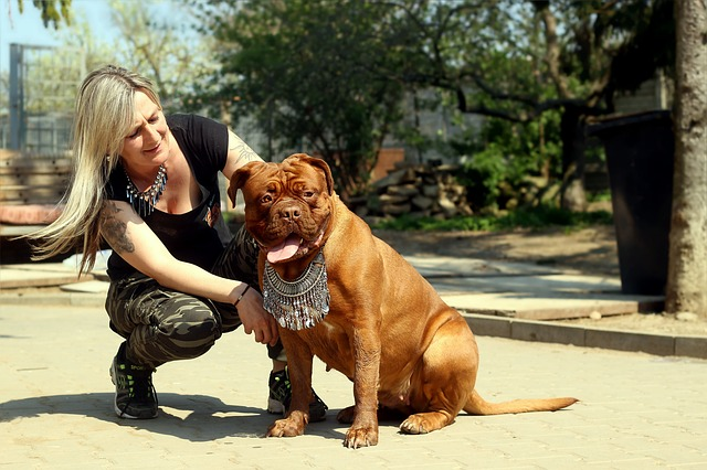 Dog Bordo Barbara De Bordeaux Dogue De Bordeaux