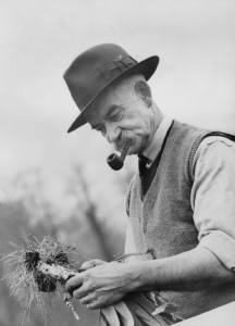Dig_For_Victory-_Life_on_a_Wartime_Allotment,_Acton,_Middlesex,_England,_1940_D485